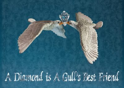 A Diamond is A Gull's Best Friend, Pieter Vandermeer, bewerking MaJo