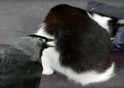 Bird Gets The Cat